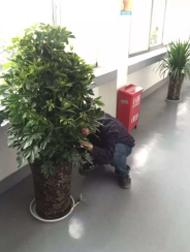 """公司开展""""搬树护树""""活动"""